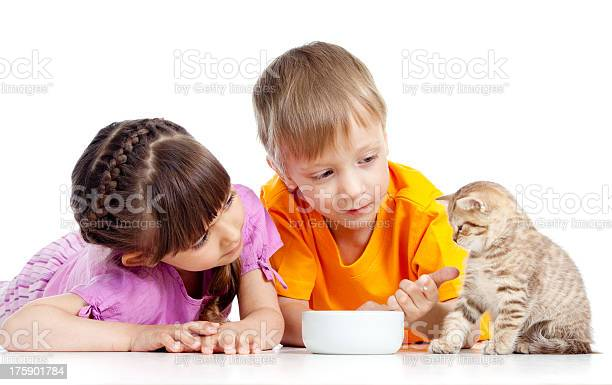 Children boy and girl feeding attractive kitten picture id175901784?b=1&k=6&m=175901784&s=612x612&h=u1wo egzeee9nlerdtndw2ypb9 navwb8siqhfbqj08=