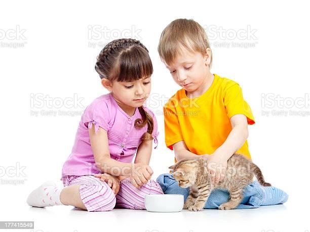 Children boy and girl feeding attractive kitten picture id177415549?b=1&k=6&m=177415549&s=612x612&h=jiyac88uewsjcg1jg5vsppzigh6ua2bxi0fsub qigg=