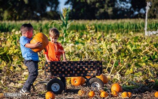Children boys picking up pumpkins at a pumpkin patch