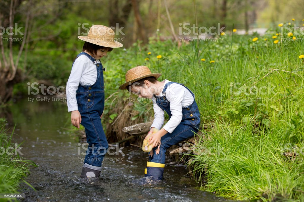 Children, boys, playing on little river with ducklings, letting the duckling swimming for the first time. Childhood concept royalty-free stock photo