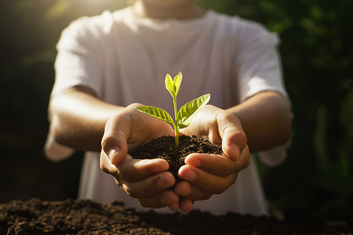 children caring young plant. hand holding small tree in morning light