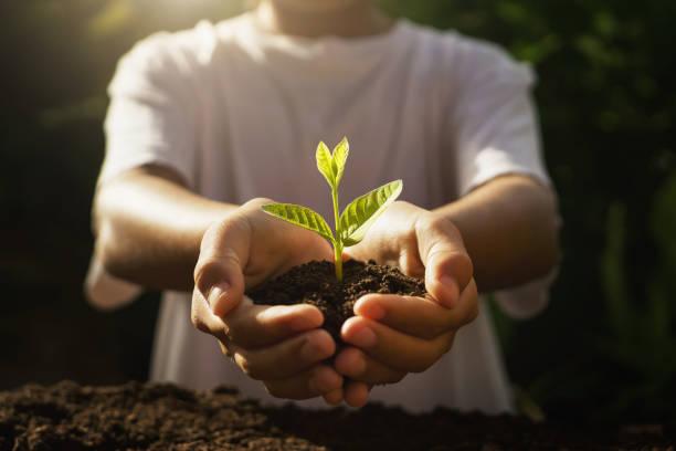 Kinder für die Pflege der jungen Pflanze. Hand hält kleinen Baum im Morgenlicht – Foto