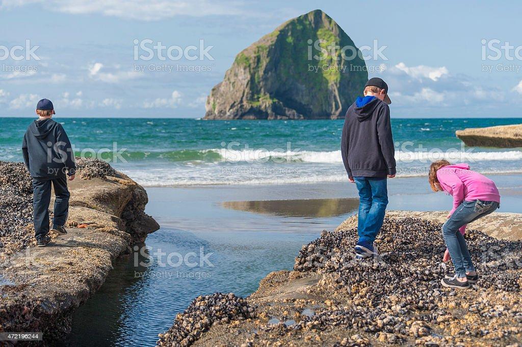 Children explorying tidepools at Pacific City Oregon stock photo