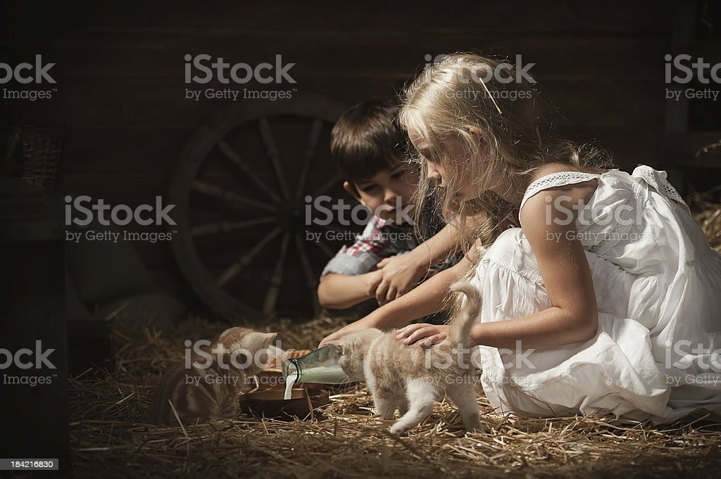 Children feed kittens milk stock photo