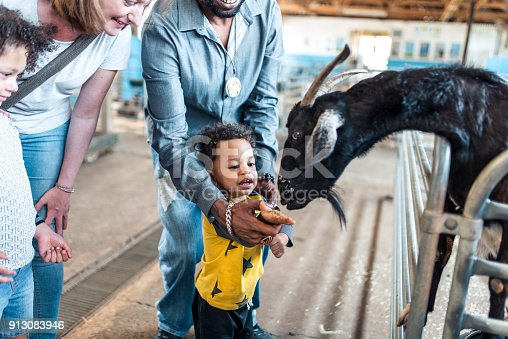 Children feeding a goat on a farm