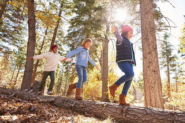 Children Having Fun And Balancing On Tree In Fall Woodland Children Having Fun And Balancing On Tree In Fall Woodland pre adolescent child stock pictures, royalty-free photos & images
