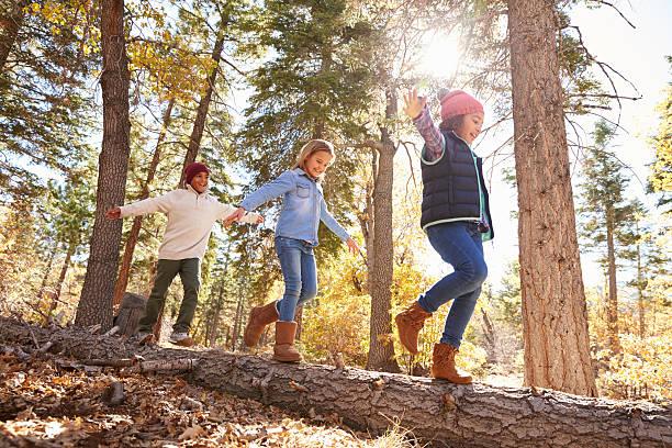 Crianças se divertindo e equilibrando-se na árvore na Floresta de outono nos EUA - foto de acervo