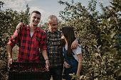 Vater zeigt seinen Kindern wie man Kirschen vom Baum richtig pflückt