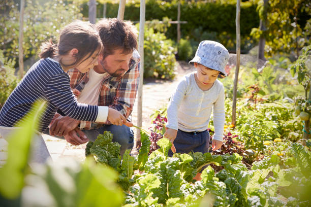 Children Helping Father As They Work On Allotment Together Children Helping Father As They Work On Allotment Together community garden stock pictures, royalty-free photos & images