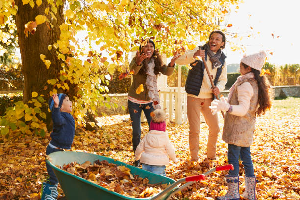 Children Helping Parents To Collect Autumn Leaves In Garden stock photo