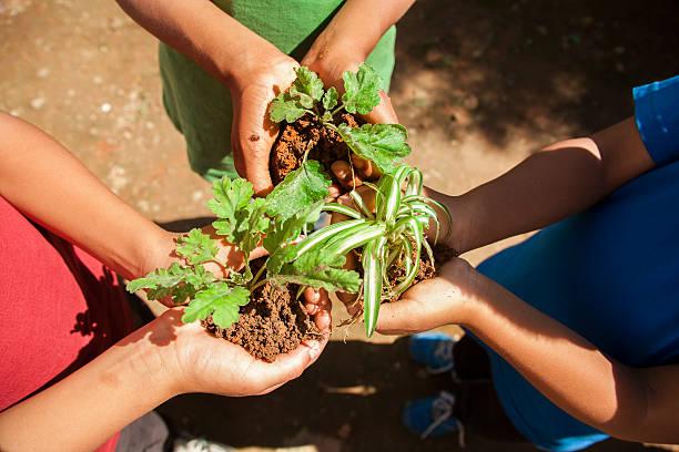 kinder halten jungpflanzen in händen. garten. umweltschutz. - tag der erde stock-fotos und bilder