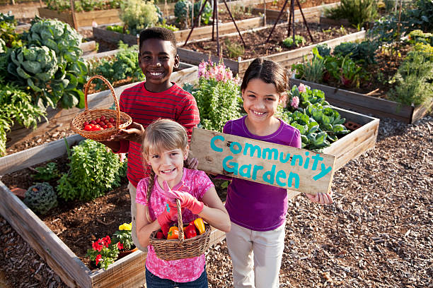 Children holding community garden sign A group of three multi-ethnic children standing in front of planters of growing vegetables.  A girl in a purple shirt is holding up a wooden sign that has COMMUNITY GARDEN painted on it.  The African American boy and little blond girl are holding baskets of tomatoes and peppers. community garden stock pictures, royalty-free photos & images