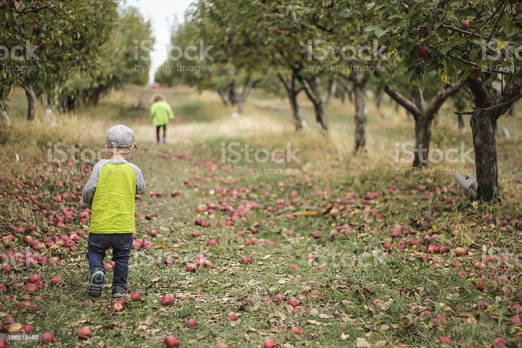 Children in Apple Orchard stock photo