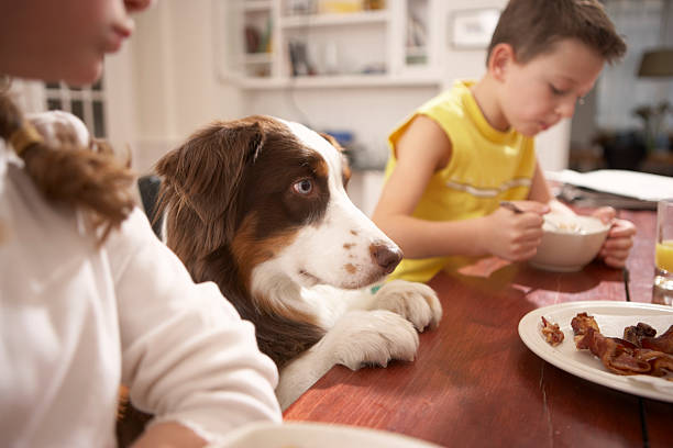 Children (6-8) in kitchen at table with dog  temptation stock pictures, royalty-free photos & images
