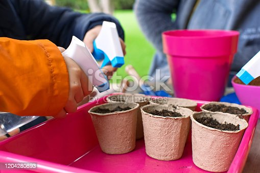 Young children learning how to plant seeds in garden. Narrow depth of field of hands holding seeds and black soil in pot. Ecological garden at primary school in Spain