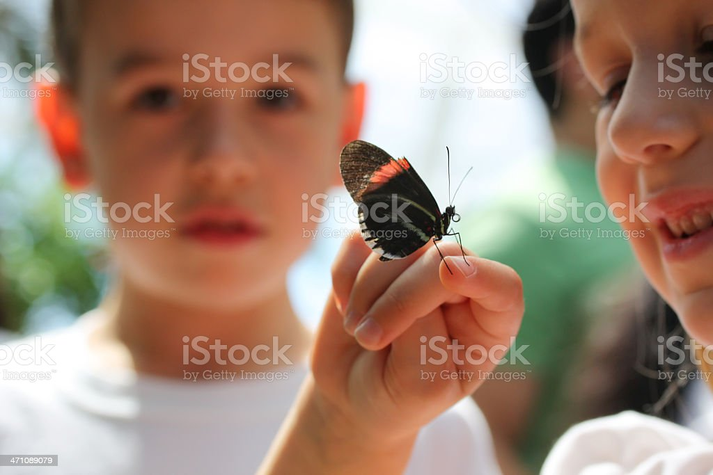 Children looking at butterfly on their hand royalty-free stock photo
