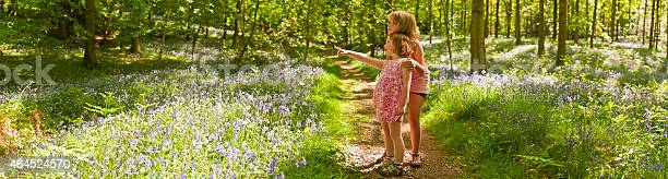 Photo of Children looking at nature idyllic summer wilderness forest trail panorama