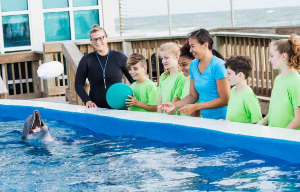 kinder auf entdeckungsreise, delphin, trainer im marine park - vorschulzoothema stock-fotos und bilder
