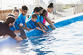 A group of multi-ethnic children and their teacher on a field trip to a marine park. They are petting a dolphin with the help of a trainer.
