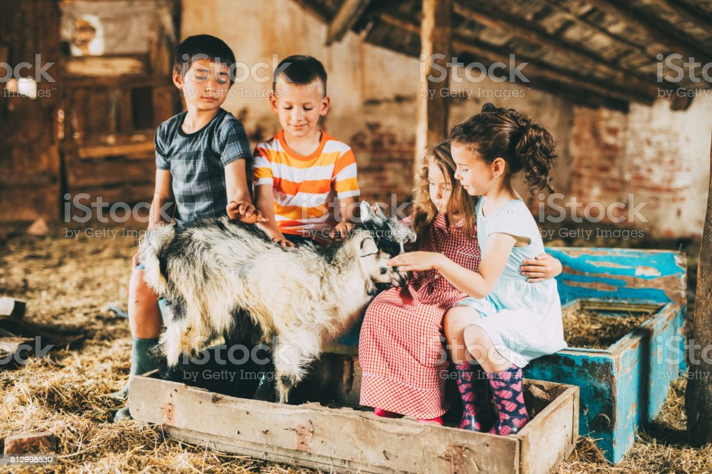 Children petting a goat stock photo