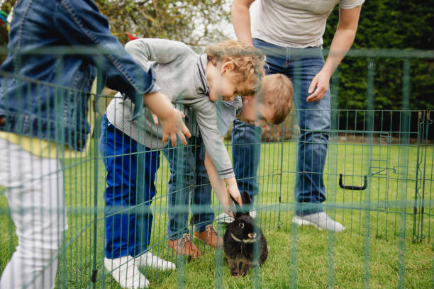 children petting a pet rabbit - playpen stock pictures, royalty-free photos & images