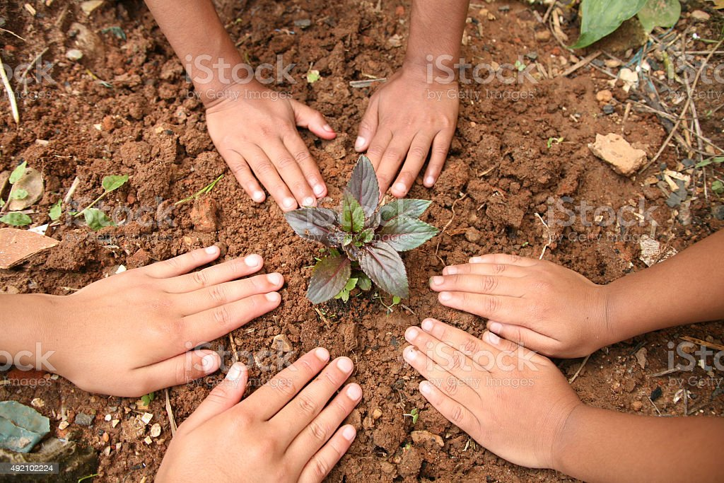 Children plant seedling plant in garden.  Environmental conservation. stock photo