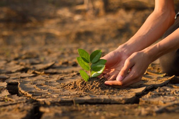 Children planting a tree climate change crisis stock photo