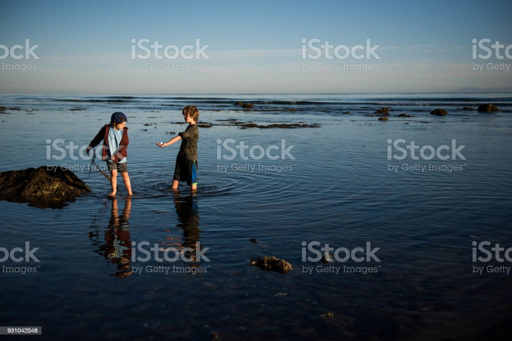 Children playing at sunset with seaweed in a tide pool stock photo