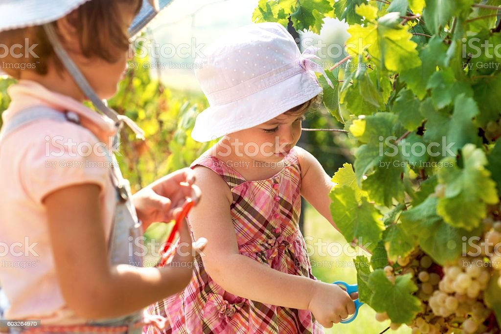 Have a Vineyard Pruning Party or Hire Contract Crew