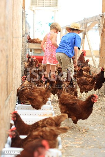 istock Children playing with chickens in the coop 183338380