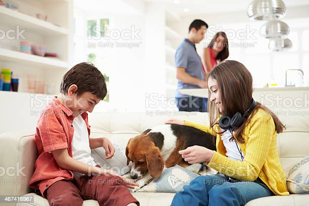 Children playing with dog on sofa as parents make meal picture id467416967?b=1&k=6&m=467416967&s=612x612&h=w1qs0urzfnq4aclca8mbuba9ufb0ygblnnlyxo mwji=
