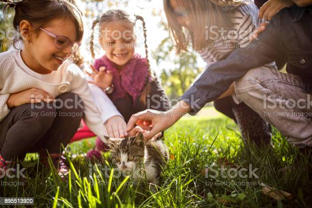 Children playing with little cat picture id895513920?b=1&k=6&m=895513920&s=612x612&h=vcvujrq mf7phgh30ax99wffvawhbvu82wi0exh3juc=