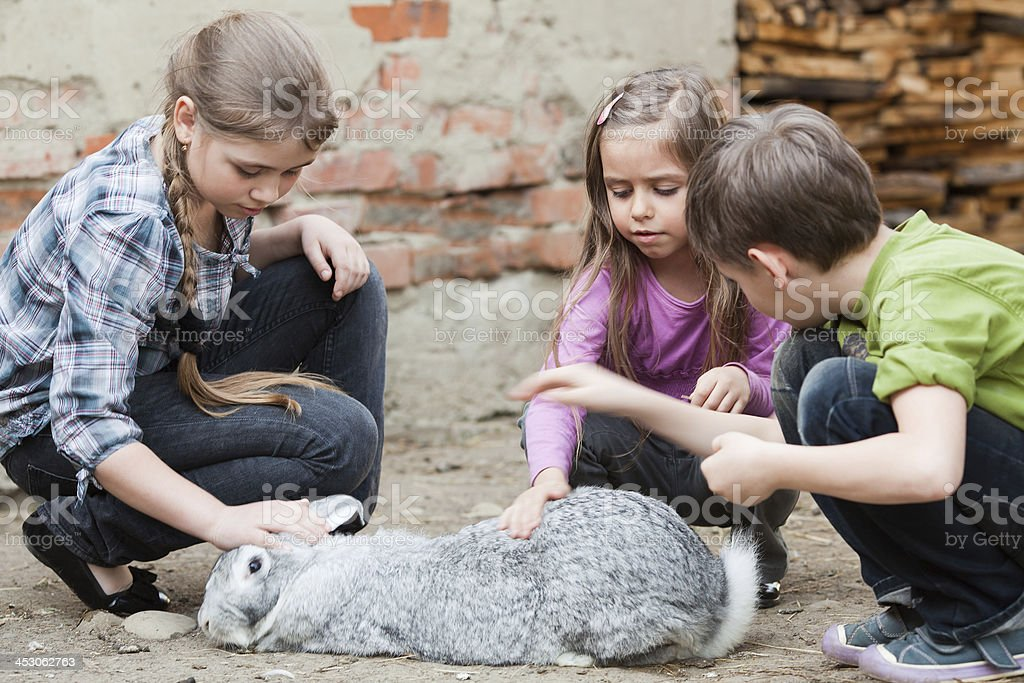 Children playing with rabbit stock photo