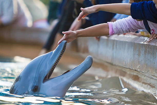 children reaching out to touch a dolphin - animals in captivity stock pictures, royalty-free photos & images