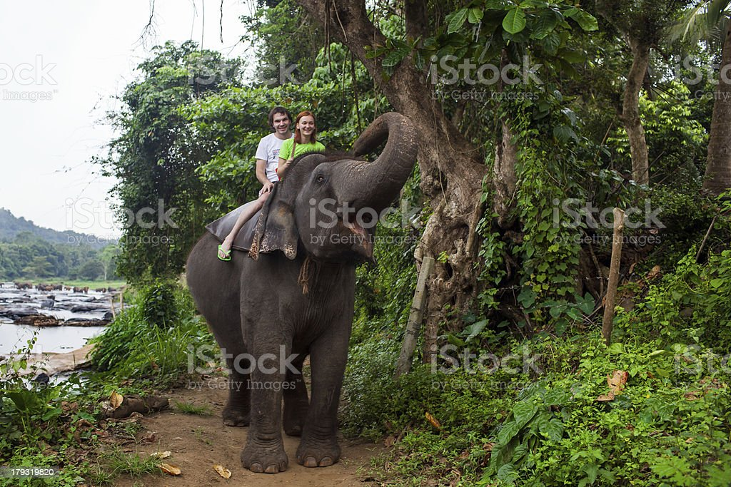 Children riding an elephant by the river in Sri Lanka royalty-free stock photo
