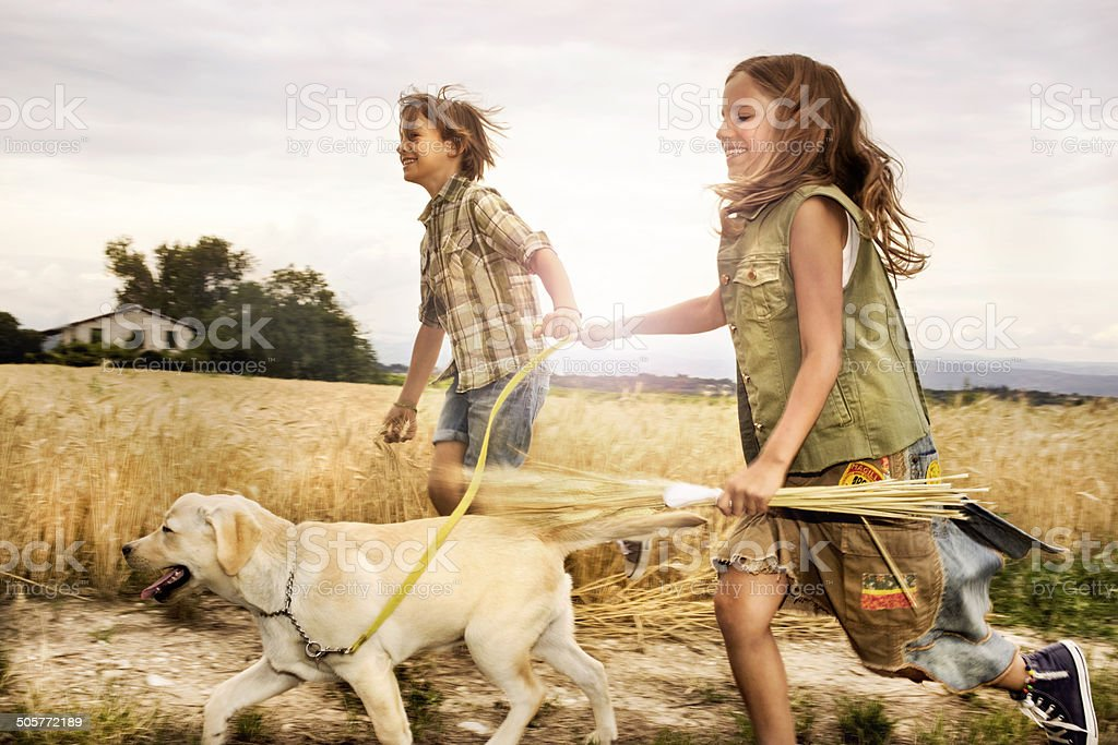 children running with the dog in wheat at sunset stock photo