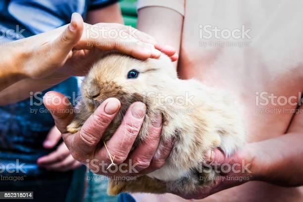 Children stroke rabbit picture id852318014?b=1&k=6&m=852318014&s=612x612&h=ex4jlsogol1vvqen8gcr3fv6jaokslptfcz7 gthzmw=