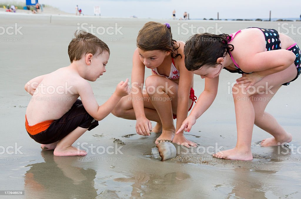 Children studying a jelly fish royalty-free stock photo
