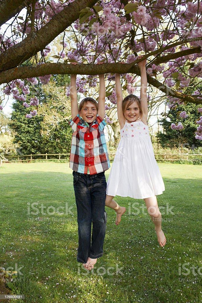 Children Swinging From Tree In Backyard Stock Photo ...