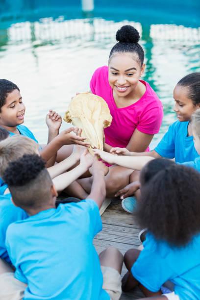 kinder, lehrer auf exkursion, delphin schädel untersuchen - vorschulzoothema stock-fotos und bilder