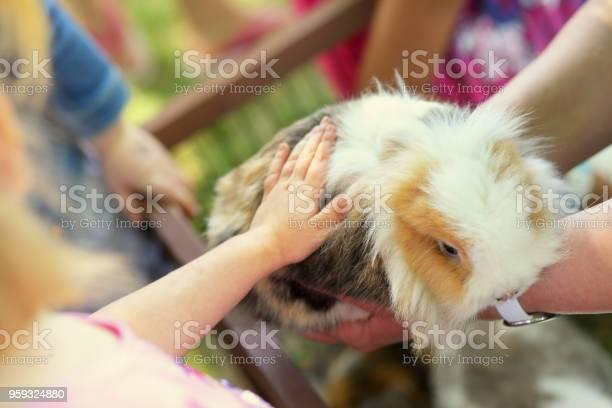 Children touching shy bunny outdoor picture id959324880?b=1&k=6&m=959324880&s=612x612&h=ocvzejhwqwekc2lchugbmsc7tlkzqobet7snwa295 g=