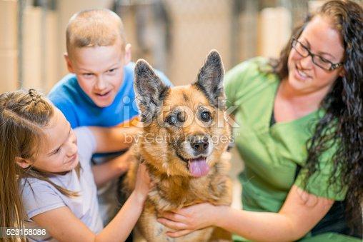 istock Children Volunteering at an Animal Shelter 523158086