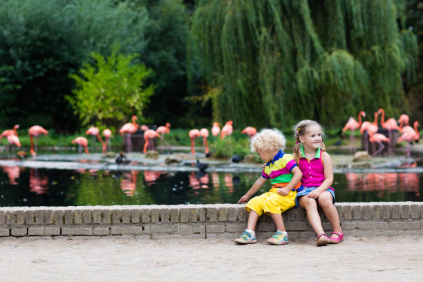 children watching animals at the zoo - zoo stock pictures, royalty-free photos & images