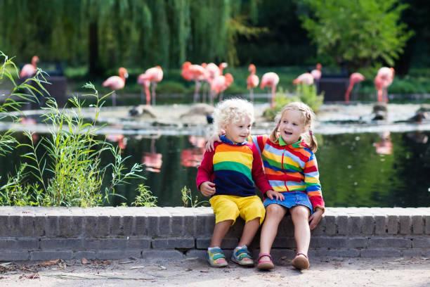 children watching animals at the zoo - vorschulzoothema stock-fotos und bilder