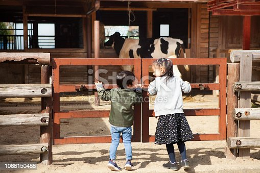 Children watching cows at the zoo