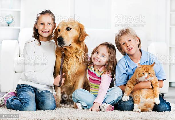 Children with animals sitting on the carpet picture id171362777?b=1&k=6&m=171362777&s=612x612&h=  w7w3s8o338ru3 1xoylubhe2pjmu8b6syyfomesiw=