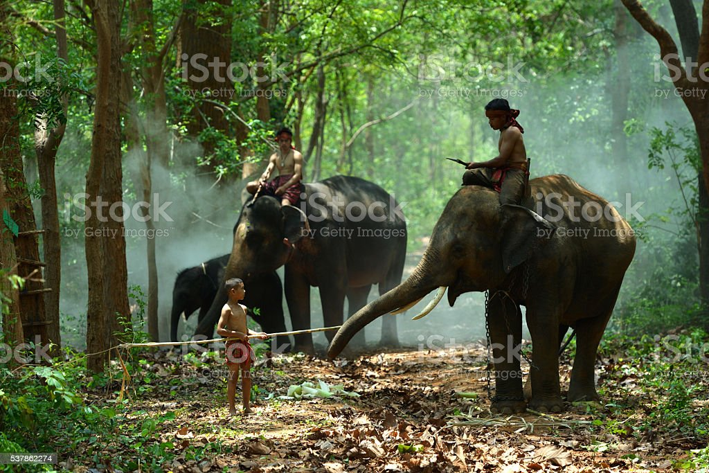 Children with Elephants and Mahout stock photo