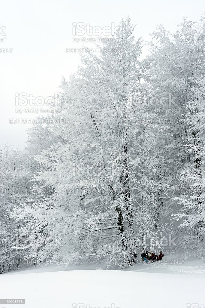 Children with Malamut on Snow in Forest Slovenia Europe royalty-free stock photo