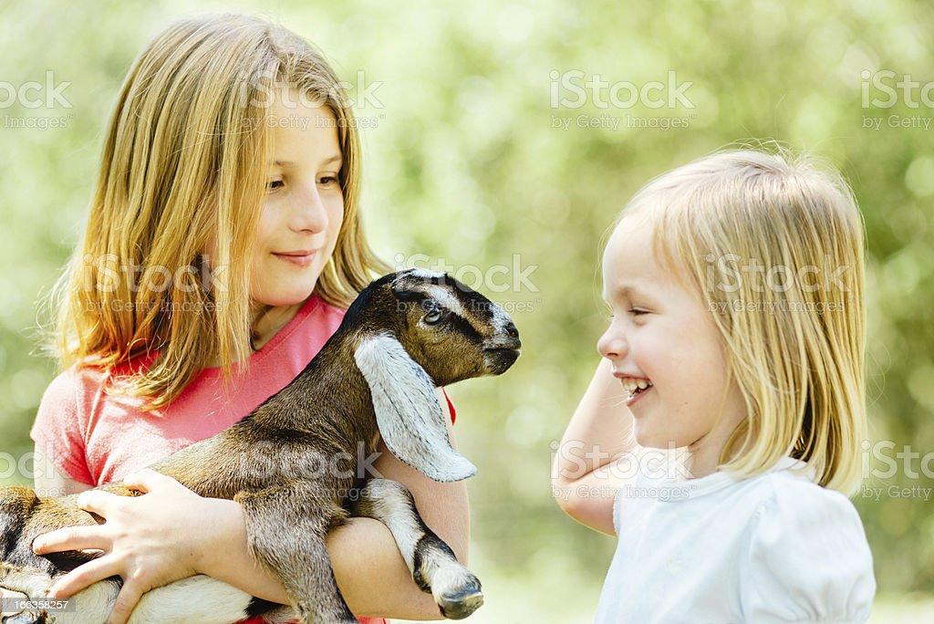 Children's farm stock photo