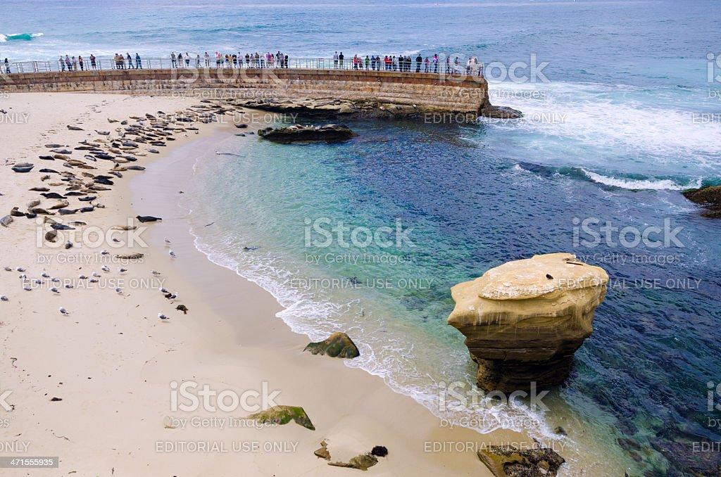 Children's Pool Beach at La Jolla in San Diego, CA royalty-free stock photo